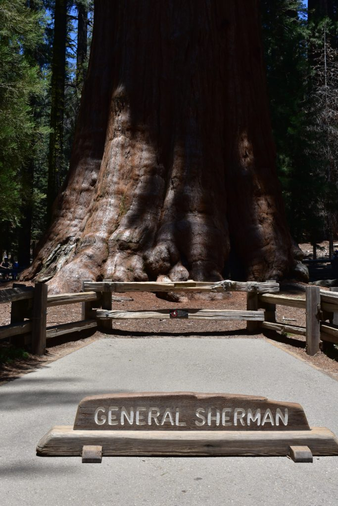 Sequoias at Sequoia National Park